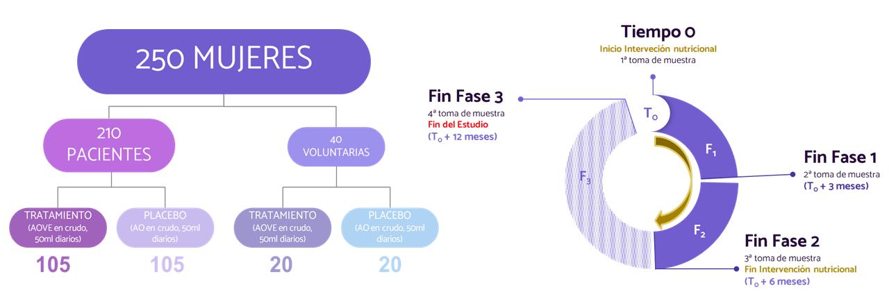 Esquema explicativo del desarrollo del proyecto